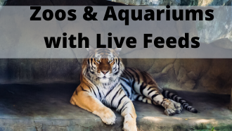 Zoos & Aquariums with Live Feeds